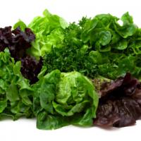 Growing Lettuces & Salad Leaves