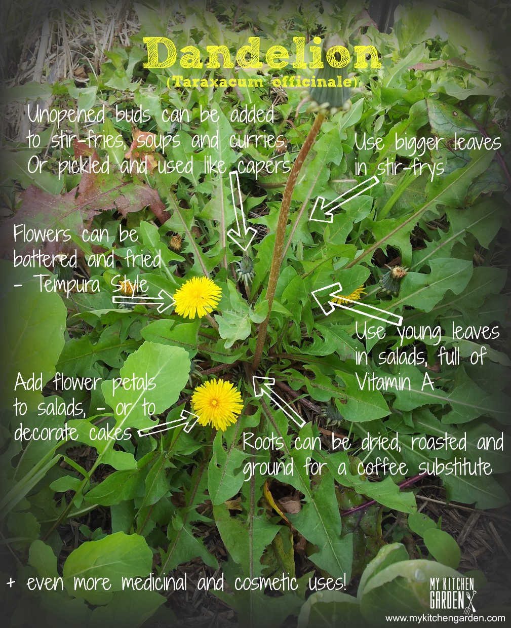 Uses Of Kitchen Garden 8 Ways To Eat Dandelions My Kitchen Garden