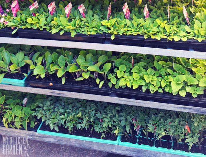 Seedlings Display