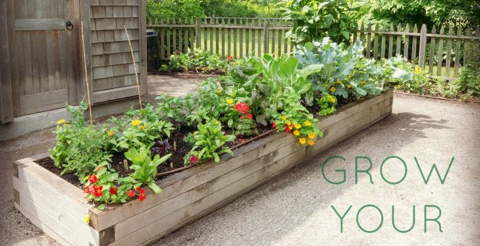 Raised garden beds WITH VEGETABLE GARDEN