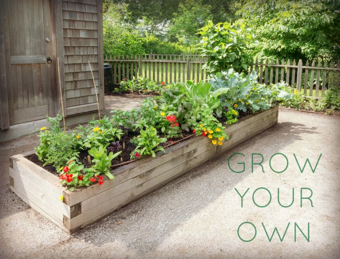 Grow Your Own, Autumn-Winter