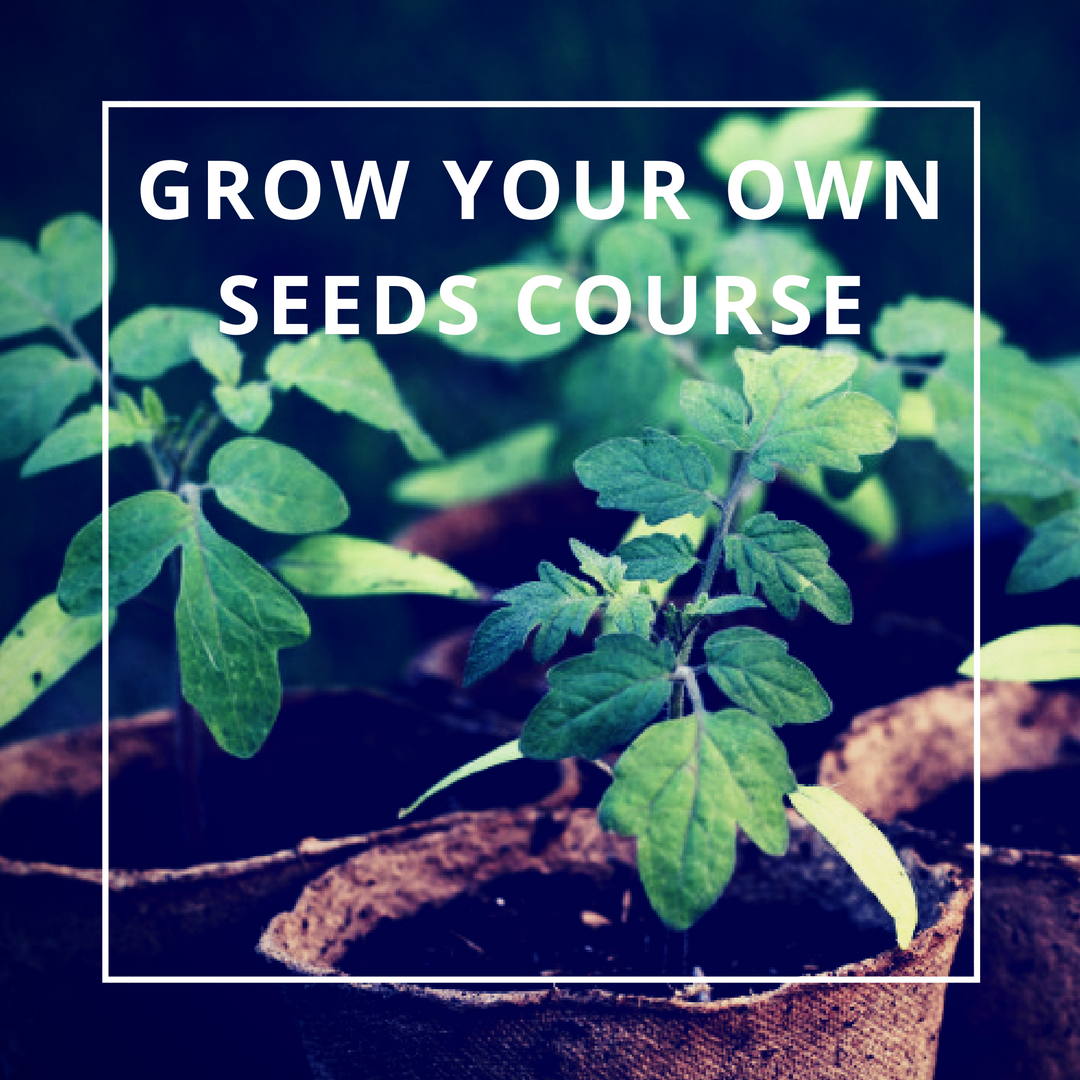 Grow Your Own, Seeds